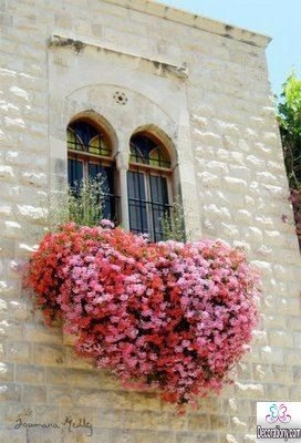 Home window with flowers