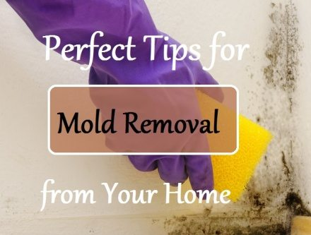 Perfect Tips for Mold Removal from Your Home
