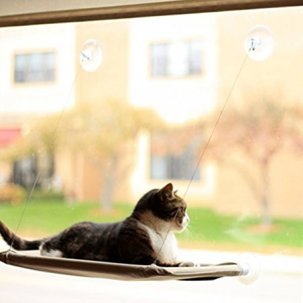 Window perches for cats!