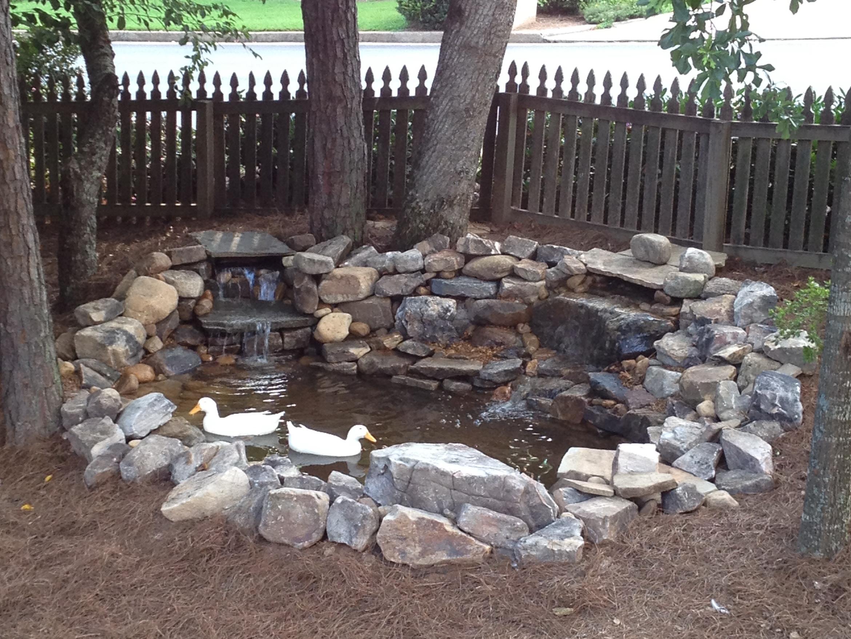 Backyard duck ponds