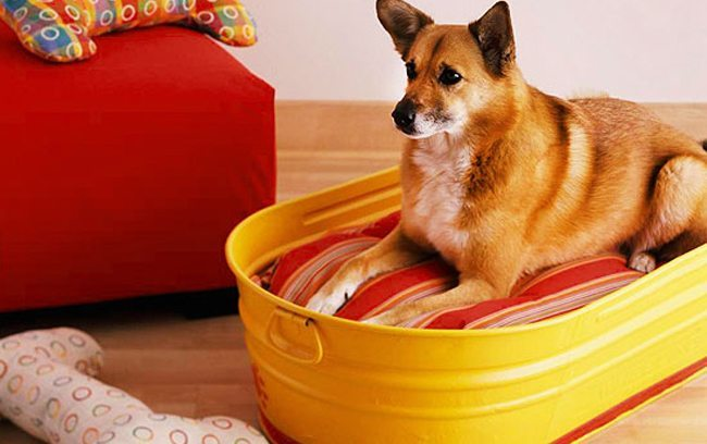 Best DIY Dog Bed