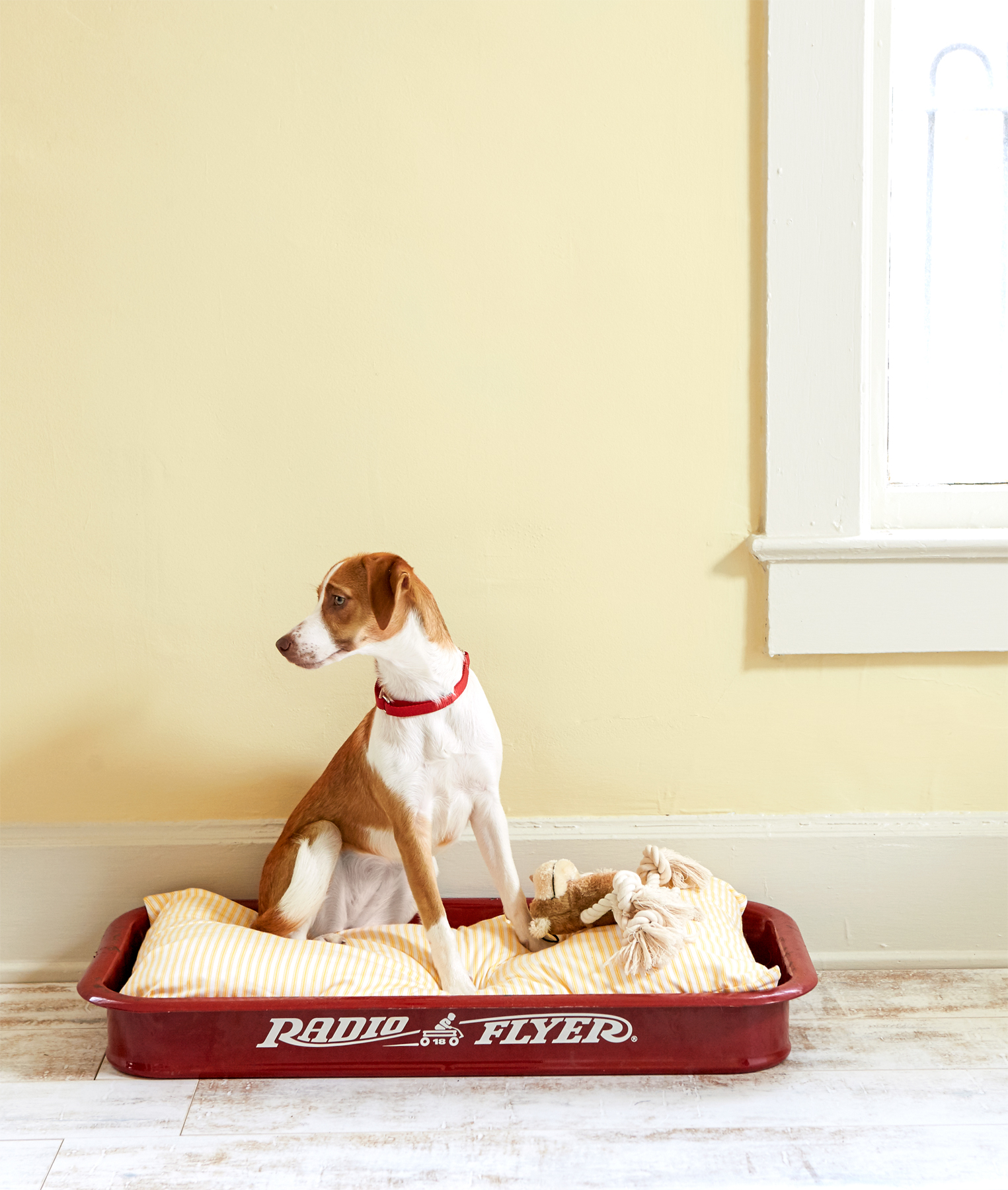 diy dog bed from red wagon