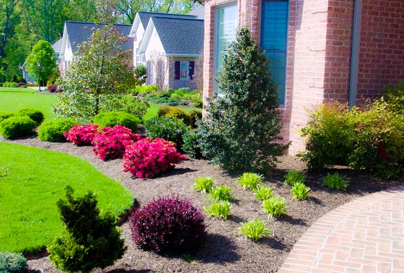 front yard landscaping ideas - young tree investment