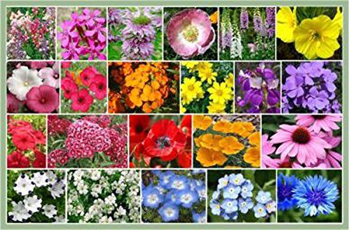 more about flower bed ideas