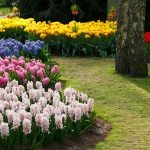 18 Flower Bed Ideas and Designs With Pictures