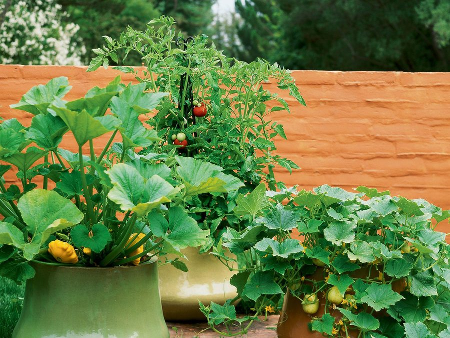 how to start a garden cleverly