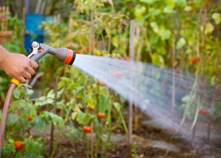 extraordinary way of how to start a garden