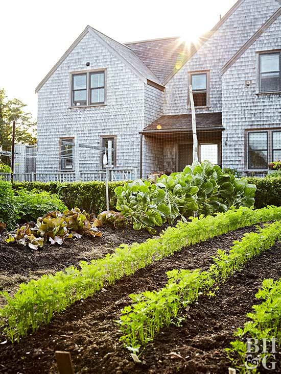 best way of how to start a garden