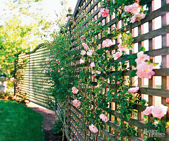 Lattice fence for plants
