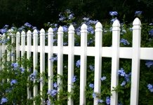 white picket fence with blue flowers
