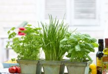 improve home air quality with indoor plants