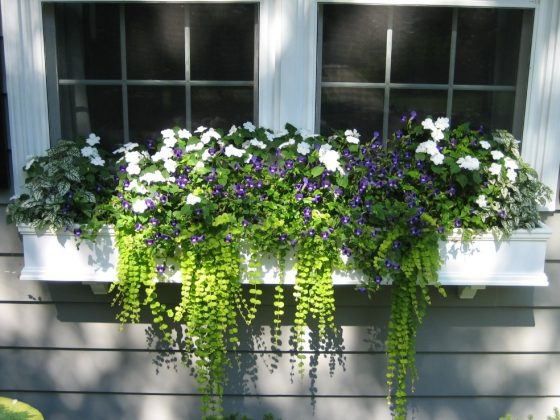 Window-Planter-Box-Flowers