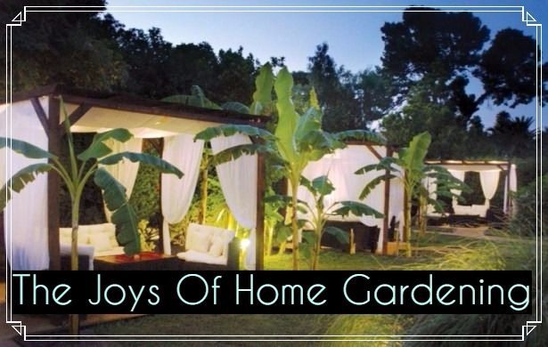 The joy of home gardening tips & ideas