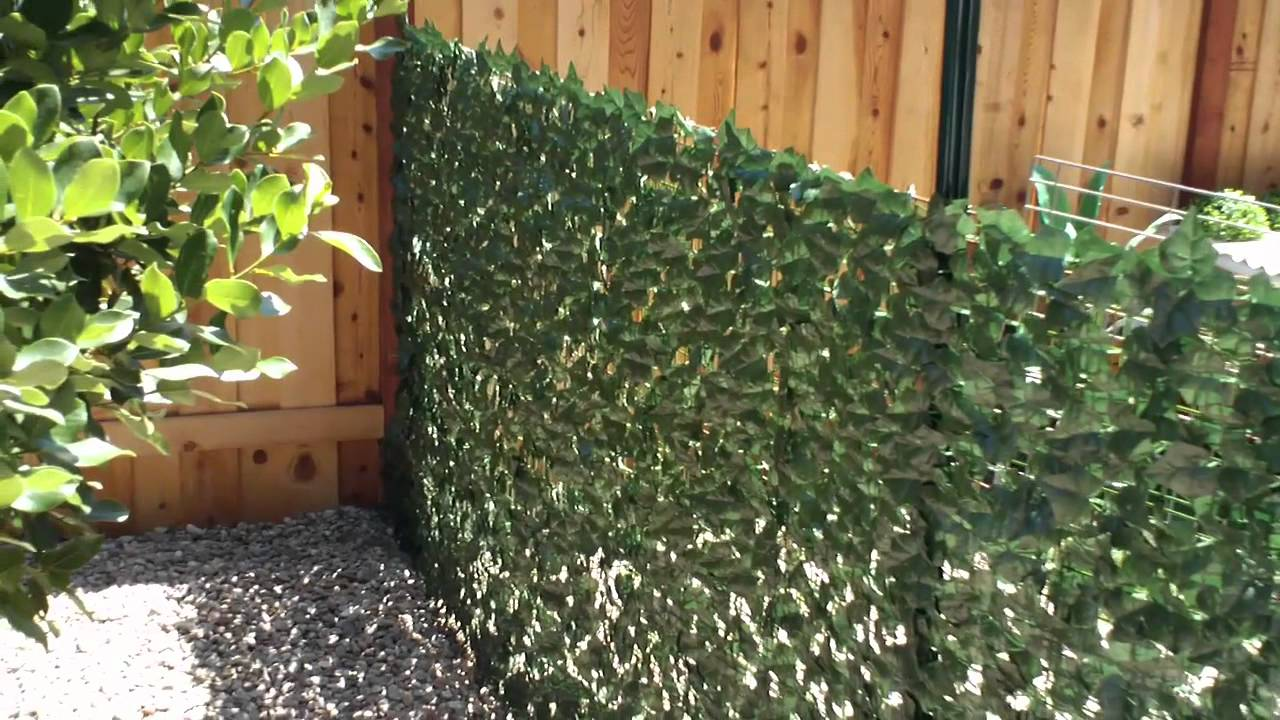 Privacy Fence Ideas-Ivy wall fence