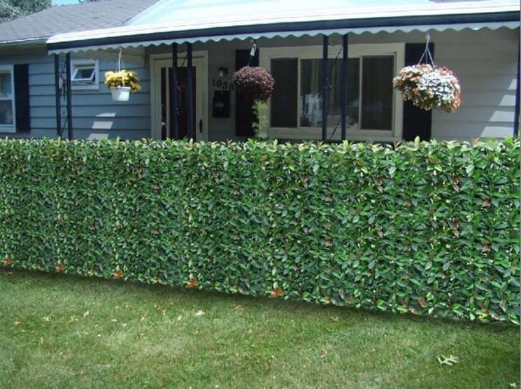 Privacy Fence Ideas-inexpensive floral fence