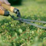 best grass cutting